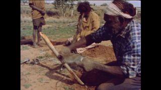 Camels and the Pitjantjara
