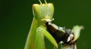 Bushwhacked! Bugs