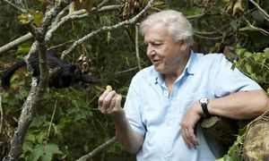 Attenborough's Planet Earth