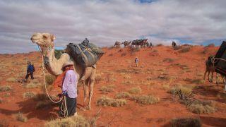 Running Wild: Australia's Camels